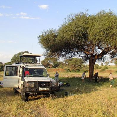 Die abenteuerliche Tierwelt Tansanias