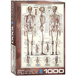 Das Skelett Puzzle 1000 Teile Ab 1000 Teile Online Bestellen