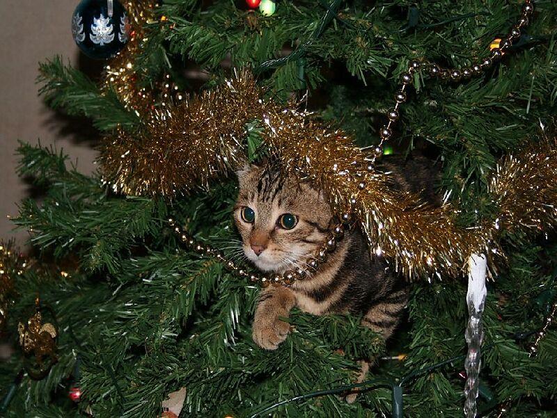 Weihnachtsbaum Spiele.Katze Im Weihnachtsbaum 100 Teile Puzzle