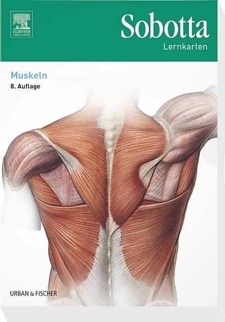 Sobotta Lernkarten Muskeln - Lars Bräuer - Buch kaufen | exlibris.ch