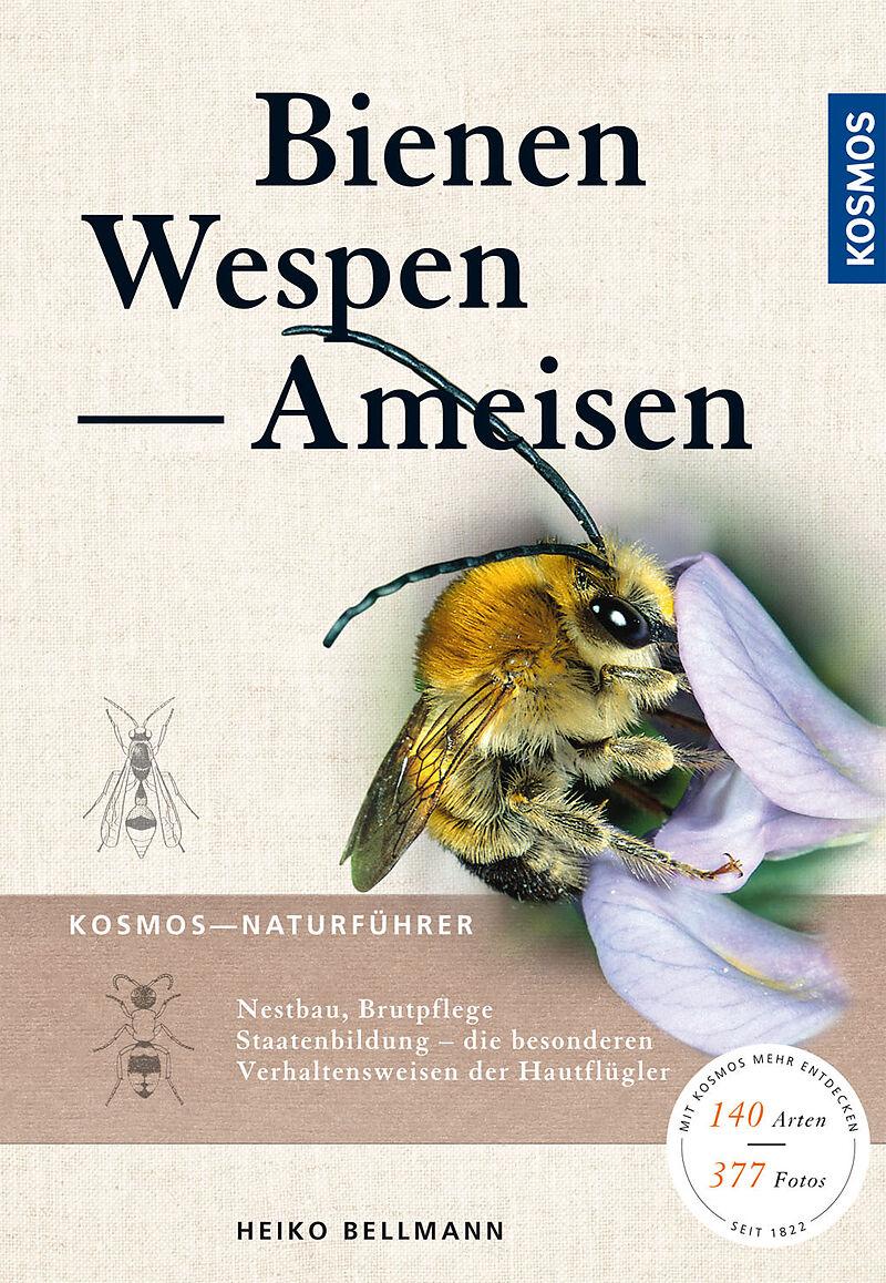 Bienen Wespen Ameisen Heiko Bellmann Buch Kaufen Ex Libris