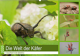 Cover: https://exlibris.azureedge.net/covers/9783/6711/4436/5/9783671144365xl.jpg