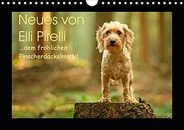 Kalender (Kal) Neues von Elli Pirelli, dem fröhlichen Pinscherdackelmädel (Wandkalender 2021 DIN A4 quer) von Kathrin Köntopp
