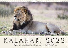 Kalender (Kal) Kalahari - Tierreichtum im Kgalagadi Transfrontier Park, Südafrika (Wandkalender 2022 DIN A4 quer) von Silvia Trüssel
