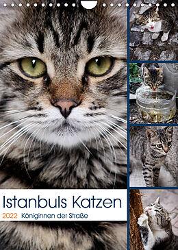 Kalender (Kal) Istanbuls Katzen (Wandkalender 2022 DIN A4 hoch) von Harald Wagener