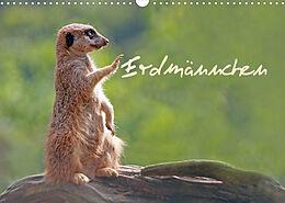 Kalender (Kal) Erdmännchen (Wandkalender 2022 DIN A3 quer) von Chawera