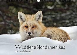 Kalender (Kal) Wildtiere Nordamerikas (Wandkalender 2022 DIN A3 quer) von Ursula Salzmann