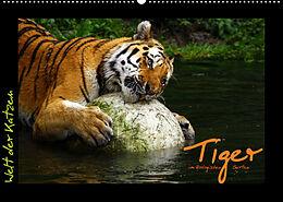 Kalender (Kal) Welt der Katzen - Tiger (Wandkalender 2022 DIN A2 quer) von Marcus Skupin