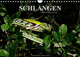 Kalender (Kal) Schlangen (Wandkalender 2022 DIN A4 quer) von Benny Trapp
