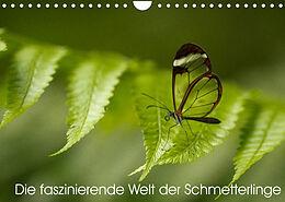 Kalender (Kal) Die faszinierende Welt der Schmetterlinge (Wandkalender 2022 DIN A4 quer) von Benjamin Nocke