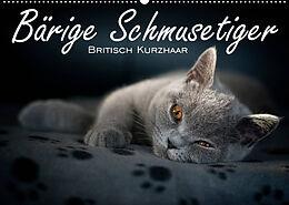 Kalender Bärige Schmusetiger - Britisch Kurzhaar / CH-Version (Wandkalender 2022 DIN A2 quer) von Inge Zimmermann-Probst