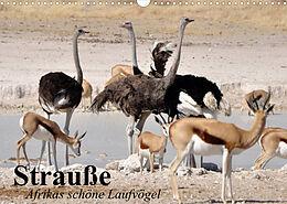 Kalender (Kal) Strauße. Afrikas schöne Laufvögel (Wandkalender 2022 DIN A3 quer) von Elisabeth Stanzer