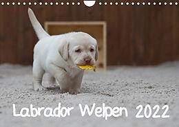 Kalender (Kal) Labrador Welpen (Wandkalender 2022 DIN A4 quer) von Heidi Bollich
