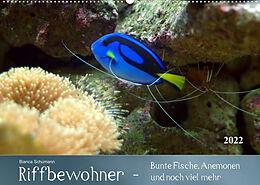 Kalender Riffbewohner - Bunte Fische, Anemonen und noch viel mehrAT-Version (Wandkalender 2022 DIN A2 quer) von Bianca Schumann