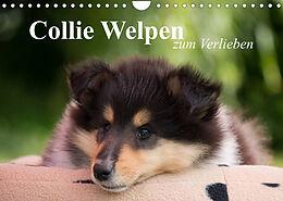 Kalender (Kal) Collie Welpen zum Verlieben (Wandkalender 2022 DIN A4 quer) von Thomas Quentin