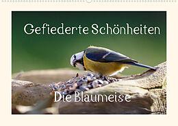 Kalender Gefiederte Schönheiten - Die Blaumeise (Wandkalender 2022 DIN A2 quer) von Rolf Pötsch