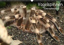 Kalender (Kal) Vogelspinnen (Theraphosidae)CH-Version (Wandkalender 2022 DIN A3 quer) von Barbara Mielewczyk