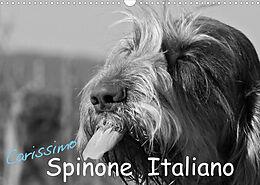 Kalender (Kal) Carissimo Spinone Italiano (Wandkalender 2022 DIN A3 quer) von Silvia Drafz