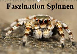 Kalender (Kal) Faszination Spinnen (Wandkalender 2022 DIN A3 quer) von Elisabeth Stanzer