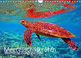 Kalender (Kal) Meeresschildkröten - Bedrohte Schönheiten (Wandkalender 2022 DIN A4 quer) von Andrea Hess