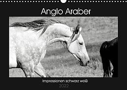 Kalender (Kal) Anglo Araber Impressionen schwarz weiß (Wandkalender 2022 DIN A3 quer) von Meike Bölts