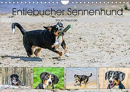 Kalender (Kal) Entlebucher Sennenhund - treue Freunde (Wandkalender 2022 DIN A4 quer) von SchnelleWelten