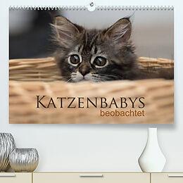 Kalender Katzenbabys beobachtet (Premium, hochwertiger DIN A2 Wandkalender 2022, Kunstdruck in Hochglanz) von Christiane Calmbacher