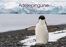 Kalender (Kal) Adéliepinguine (Wandkalender 2022 DIN A4 quer) von Anna-Barbara Utelli