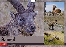 Kalender (Kal) Steinwild am PilatusCH-Version (Wandkalender 2022 DIN A4 quer) von Norbert W. Saul