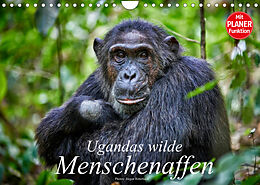 Kalender (Kal) Ugandas wilde Menschenaffen (Wandkalender 2022 DIN A4 quer) von Jürgen Ritterbach