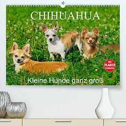 Kalender Chihuahua - Kleine Hunde ganz groß (Premium, hochwertiger DIN A2 Wandkalender 2022, Kunstdruck in Hochglanz) von Sigrid Starick