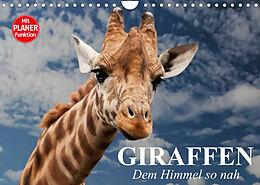 Kalender (Kal) Giraffen. Dem Himmel so nah (Wandkalender 2022 DIN A4 quer) von Elisabeth Stanzer