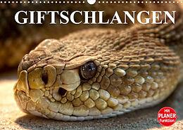Kalender (Kal) Giftschlangen (Wandkalender 2022 DIN A3 quer) von Elisabeth Stanzer