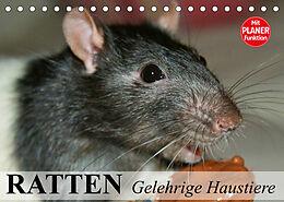 Kalender (Kal) Ratten. Gelehrige Haustiere (Tischkalender 2022 DIN A5 quer) von Elisabeth Stanzer