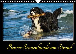 Kalender (Kal) Berner Sennenhunde am Strand (Wandkalender 2022 DIN A4 quer) von Sigrid Starick