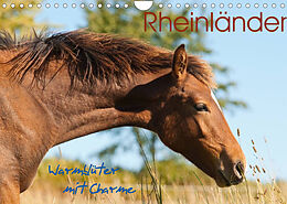 Kalender (Kal) Rheinländer - Warmblüter mit Charme (Wandkalender 2022 DIN A4 quer) von Meike Bölts