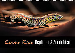 Kalender Costa Rica - Reptilien und Amphibien (Wandkalender 2022 DIN A2 quer) von Kevin Eßer