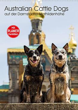 Kalender Australian Cattle Dogs auf der Darmstädter Mathildenhöhe (Wandkalender 2022 DIN A2 hoch) von Fotodesign Verena Scholze