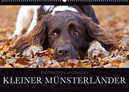 Kalender Faszination Jagdhund - Kleiner Münsterländer (Wandkalender 2022 DIN A2 quer) von Nadine Gerlach