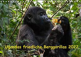 Kalender (Kal) Ugandas friedliche Berggorillas (Wandkalender 2022 DIN A4 quer) von Johanna Krause