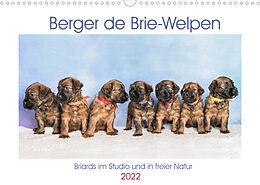 Kalender (Kal) Berger de Brie - Welpen (Wandkalender 2022 DIN A3 quer) von Sonja Tessen
