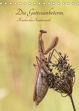 Kalender (Kal) Die Gottesanbeterin. Räuber der Insektenwelt. (Tischkalender 2022 DIN A5 hoch) von juehust