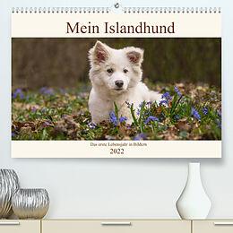 Kalender Mein Islandhund - das erste Lebensjahr in Bildern (Premium, hochwertiger DIN A2 Wandkalender 2022, Kunstdruck in Hochglanz) von Monika Scheurer