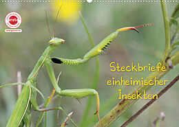 Kalender (Kal) GEOclick Lernkalender: Insekten (Wandkalender 2022 DIN A2 quer) von Klaus Feske