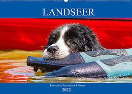 Kalender Landseer - Ein starker Freund auf 4 Pfoten (Wandkalender 2022 DIN A2 quer) von Sigrid Starick