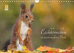 Kalender (Kal) Eichhörnchen in zauberhaften Posen (Wandkalender 2022 DIN A4 quer) von Tine Meier