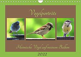 Kalender (Kal) Vogelporträts - Heimische Vögel auf meinem Balkon (Wandkalender 2022 DIN A4 quer) von Claudia Schimmack