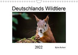 Kalender (Kal) Deutschlands Wildtiere (Wandkalender 2022 DIN A4 quer) von Björn Reibert