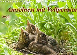 Kalender (Kal) Amselnest mit Vollpension (Wandkalender 2022 DIN A4 quer) von Kerstin Waurick