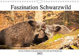 Kalender (Kal) Faszination Schwarzwild (Wandkalender 2022 DIN A4 quer) von Daniela Fett